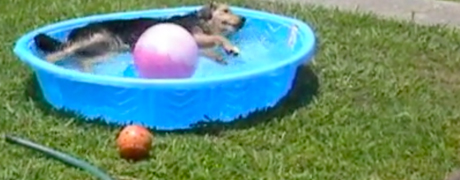 Mardi in Her Pool